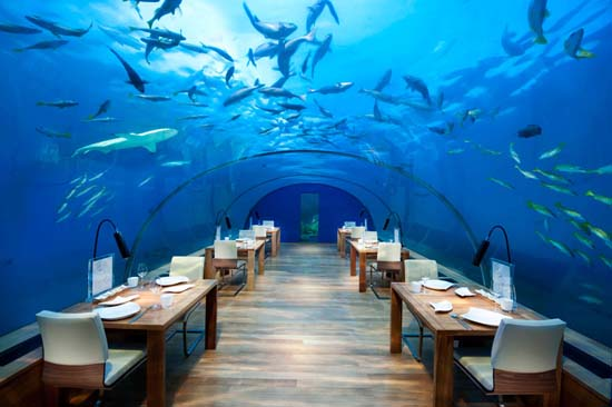 Ithaa: The World's First Underwater Restaurant in Maldives