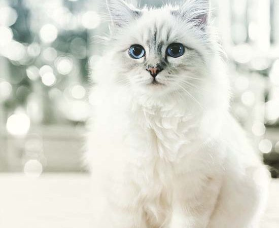 Choupette Lagerfeld Made 3 Million Euros in 2014
